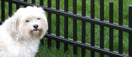 Aluminum Perimeter Residential Grade Pet Safe Fencing Option
